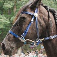 Портрет лошади :: Олег Чемоданов