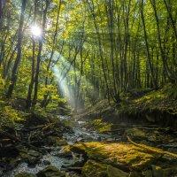 Лесной ручей на рассвете :: Фёдор. Лашков