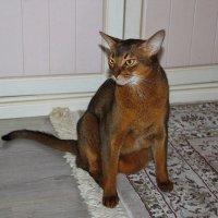 Собака, если ее позвать, прибежит; кошка – примет к сведению...... :: Tatiana Markova