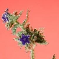 Цветок :: РАМ Стрельцов