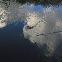 Водоплавающая с мыслями о небе :: Андрей Лукьянов