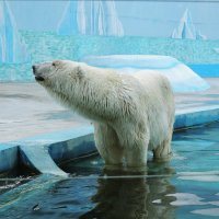 Белый медведь :: Ирина Козлова