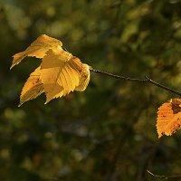 Осень. Вяз. :: Владимир Иванов