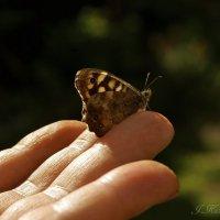 Я бабочке желание нашептала... :: Елена Kазак