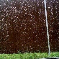 капли дождя :: Владимир