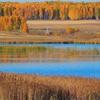 Лесное озеро! :: Елена (Elena Fly) Хайдукова