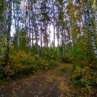 Славная Осень :: Татьяна Котельникова