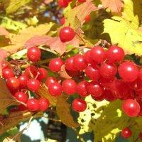 Осень достала краски... :: Galaelina ***