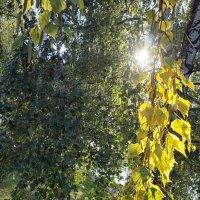 Сквозь листья ... :: Лариса Корж