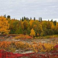 Осень пришла!!! :: Олег Кулябин