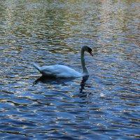 Лебедь :: Таисия Селищева