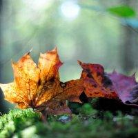 в осеннем лесу... #5 :: Андрей Вестмит