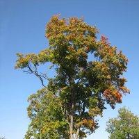 Вот и осень :: veera (veerra)