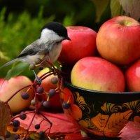 Щедрая осень с румянцем яблок :: Татьяна Каневская