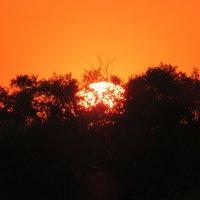 Солнце садится :: Natalia Harries