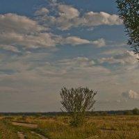 Лето в облаках :: Ольга Винницкая (Olenka)