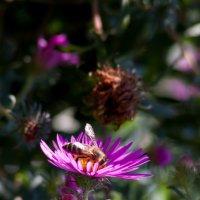 Пчелка труженница :: Алена Д