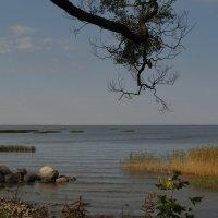 Дерево и горизонт :: Владимир Гилясев