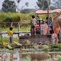 Камбоджийские зарисовки - Юные фермеры :: slavado