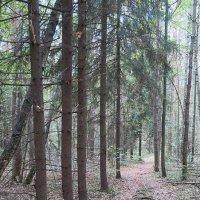 Осенняя  прогулка у  села  Данилово(Лесная тропа ведет  домой) :: Виталий Селиванов