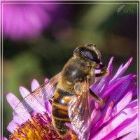 Пчела :: Анастасия Сосновская