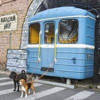 Ездовые собаки петербургской подземки :: Тата Казакова