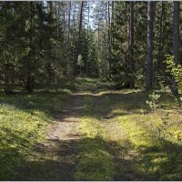 Осенний лес. :: Роланд Дубровский
