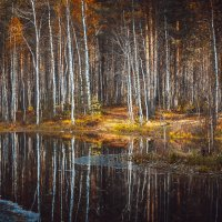 Осень в парке. :: Алексей Хаустов