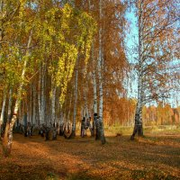 Тихий шепот осенних берёз... :: Нэля Лысенко