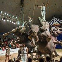 Шоу слонов :: Виктория Гавриленко