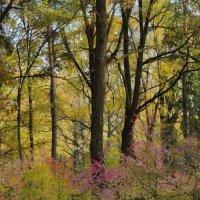 В осеннем лесу :: Olcen Len