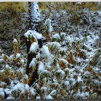 Робкая поступь зимы. :: Николай Тишкин