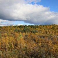 Осенние краски :: Ольга