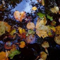 осенние листья :: Наталья Сазонова