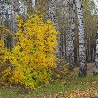В дождь, в сентябрьском лесу. :: Михаил Полыгалов
