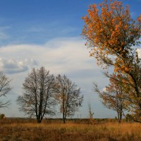Воздух свежий и прохладный, пролетает желтый лист ... :: Евгений Юрков