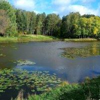 Солнечный денёк в лесопарке  в конце сентября :: Елена Павлова (Смолова)