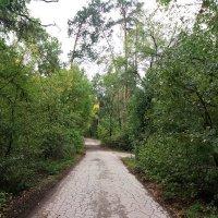 Чем дальше в лес.... :: Юрий K...