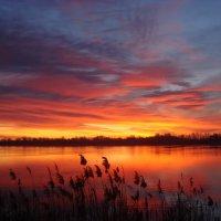 Рассвет в январе... :: Александр Петренко