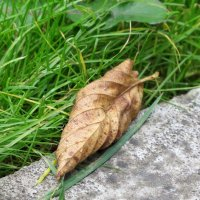 Осенний лист :: Елена Лапина