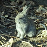 Кролёнок :: Светлана Рябова-Шатунова