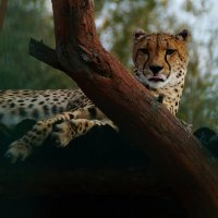 Шикарное животное !!!!!!!! :: kolyeretka