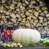 Урожайный натюрморт :: Андрей Щетинин