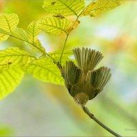 Живой цветок :: Анна Солисия Голубева