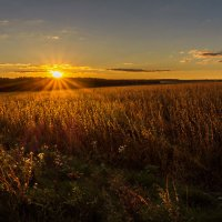 Вечернее поле... :: Сергей