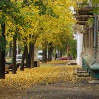 Осенние листья. :: barsuk lesnoi