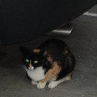 Уличная кошка.. :: Зинаида