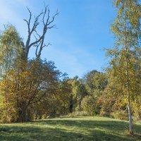 Уголок старого парка (16) :: Виталий