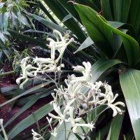 Неведанные цветочки :: veera (veerra)
