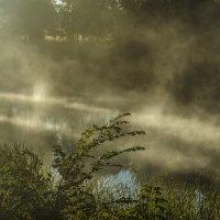 Пробиваясь сквозь туман :: Андрей Щетинин